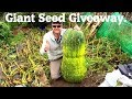 Allotment Diary : Xmas Giant Seed Giveaway Competition