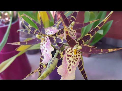 Орхидеи летом НЕ ЦВЕТУТ ..жарко нам!..