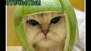 Приколы с котами - ТОПовая подборка 2.