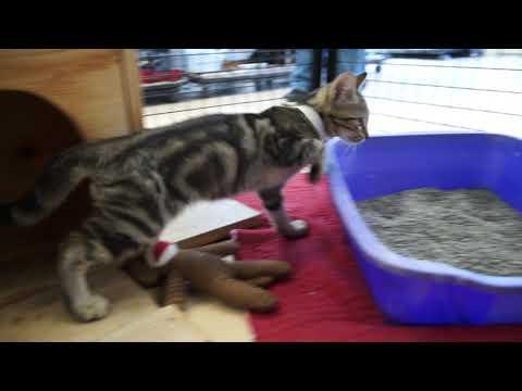 Video: Carter County Animal Shelter, September 13