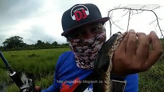 preview picture of video 'Mancing gabus di teluk pakedai'