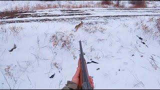 Охота на зайца. ТАКОГО Я ЕЩЁ НЕ ВИДЕЛ. Тропление зайца по первому снегу.