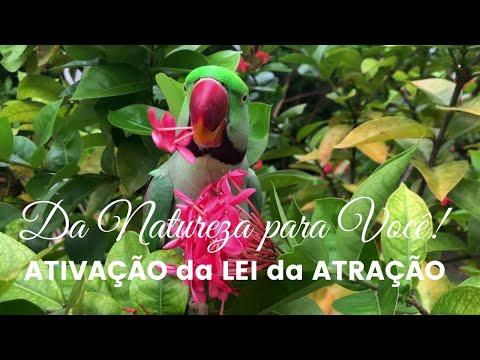 ATIVAO da LEI da ATRAO | Meditao Prosperidade Abundncia da Natureza para VOC!