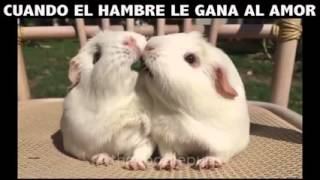 Two Rabbits Eat A Piece Of Grass
