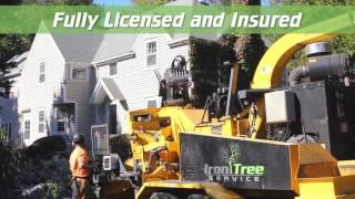 Iron Tree TV Commercial (Spring 2016 V1)