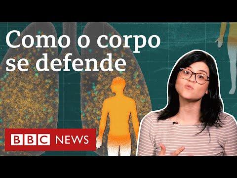 Neste vídeo, a repórter Camilla Veras Mota explica o funcionamento do nosso sistema imunológico e mostra como ele age ao ser infectado pelo coronavírus.