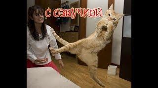 Приколы с котами с ОЗВУЧКОЙ – СМЕШНЫЕ коты и кошки 2018 – кот Блошкин – Domi Show