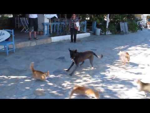 4 Cats Take on 1 Big Playful Dog