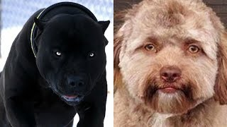 12 Beautiful and Unique Dogs!