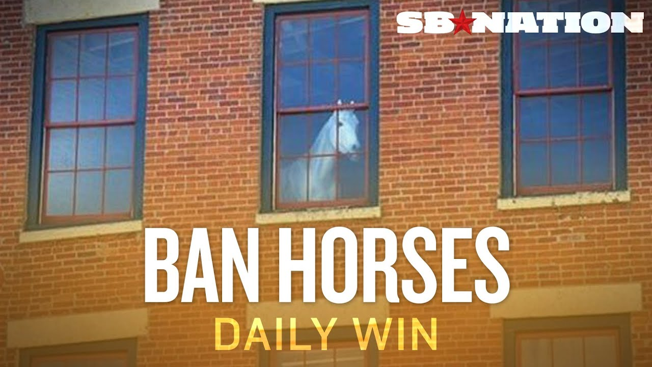 Keep Horses Out of Sports - The Daily Win thumbnail