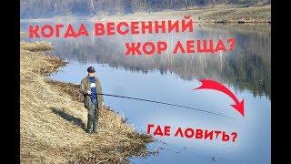 Наживки для ловля леща под водой
