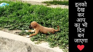 Humanity || Street Dogs || Inspirational video || The SociaL Club India