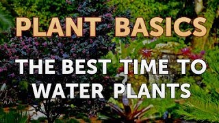 The Best Time to Water Plants
