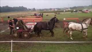 preview picture of video 'Transgraniczne zawody w powożeniu Gorzyce 2014'