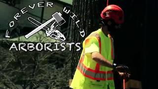 Forever Wild Arborists