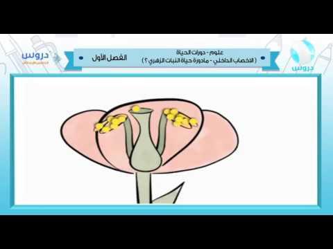 الخامس الابتدائي   الفصل الدراسي الأول 1438   علوم   دورات الحياة (النبات الزهري) 1