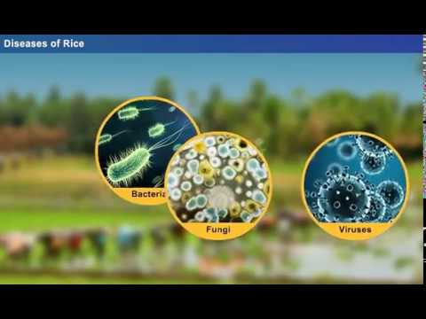 Hogyan lehet megtisztítani a belek a parazitáktól