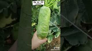 Mùa đông của Trung Quốc p2 [tik tok china]