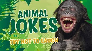Animal Jokes 2019 | TRY NOT TO LAUGH | Brilliant Minds