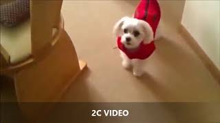 Funny dogs | Подборка приколов. Смешные собаки.