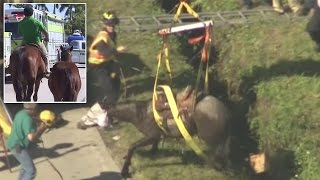 Stranded Horse Rescued From Deep Ditch After It's Spooked While Walking On Road