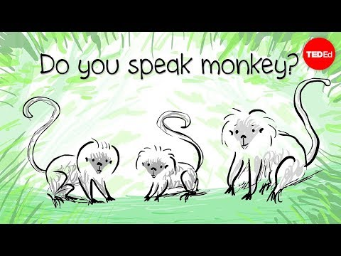 How to speak monkey: The language of cotton-top tamarins – Anne Savage