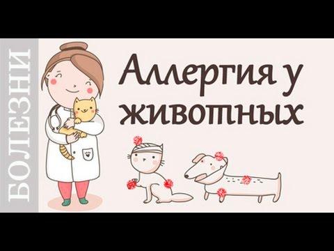 Аллергия у животных, советы ветеринара.