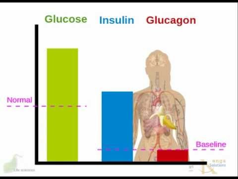 Diabetes-Diät ist eine