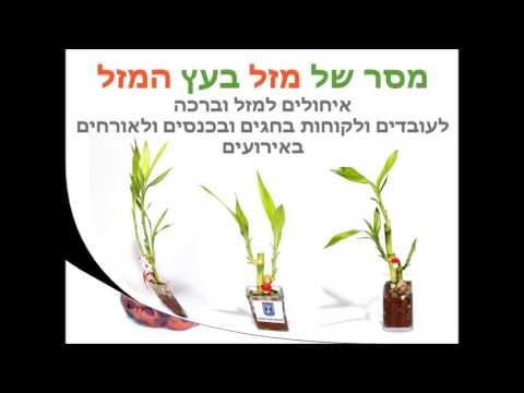 סרטון מבחר מסרים ממותגים בעציצים למתנות ולאירועים