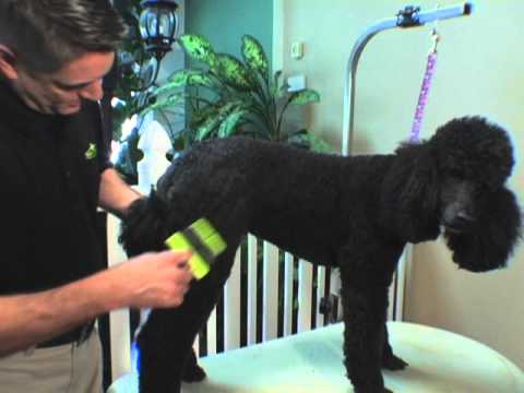 FURminator Soft Slicker Brush - Large Video