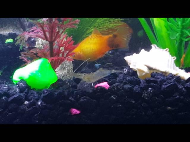 Betta fish community tank (PLEASE READ DESCRIPTION)