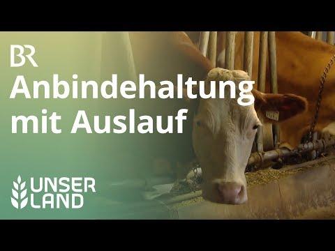 Mehr Tierwohl für Kühe: Laufstall statt Anbindehaltung   Unser Land   BR Fernsehen