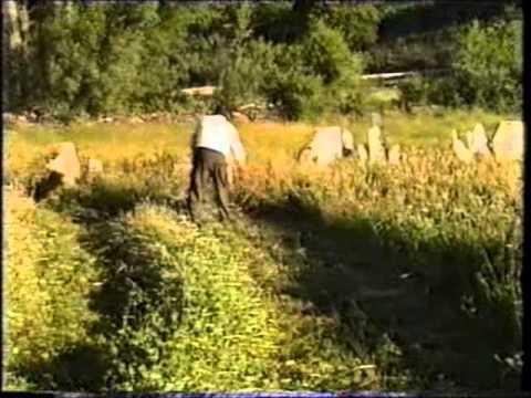 La Torre de Aliste.Siega de la hierba y recogida de patatas.