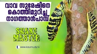 Golden Tree Snake Bites Vava Suresh While Capturing | SNAKE MASTER EP 182 01 09 2016