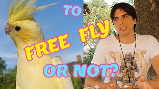 Should you train your cockatiel for free flight?