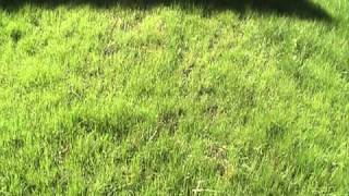 When To Mow New Grass For A Healthier Kansas City Lawn!