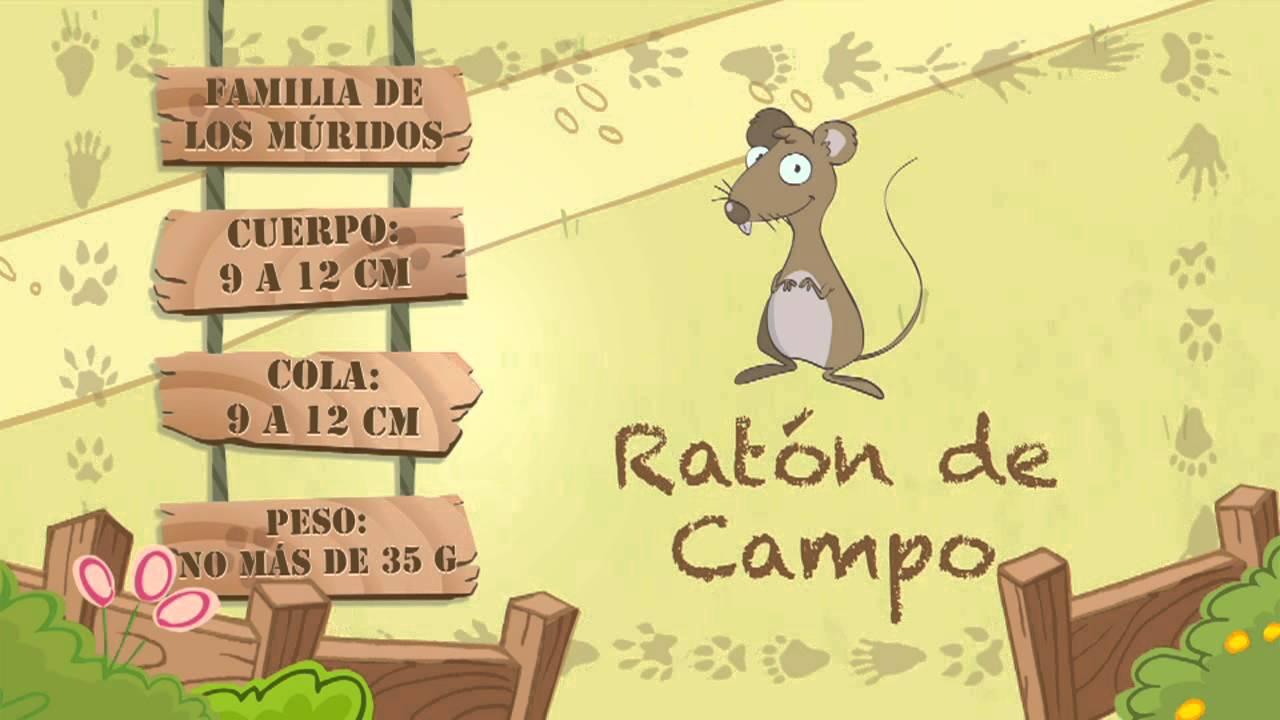 Las características del RATÓN DE CAMPO
