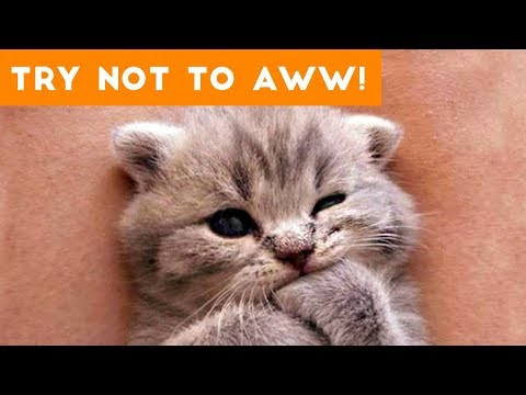 Ultimate Try Not to Aww Compilation of 2017 | Funny Pet Videos