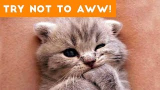 Ultimate Try Not to Aww Compilation of 2017   Funny Pet Videos