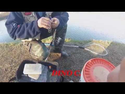 Fiume di una pesca di alzavola-kem