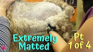 I Had No Idea Grooming My Matted Dog Was This Hard PT1 Of 4