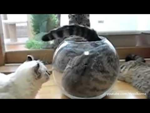 סרטון חתולים וכלבים שמצליחים להיכנס למקומות צרים