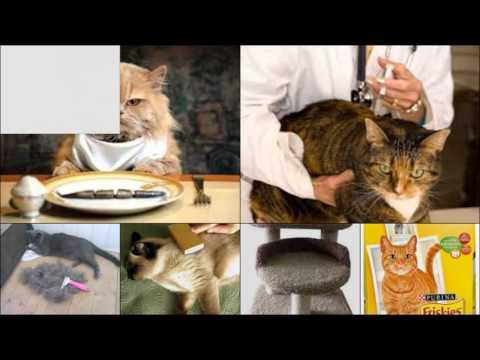 Чем вывести паразитов у котов