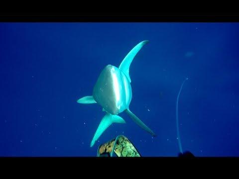 Акулы атаковали подводного охотника