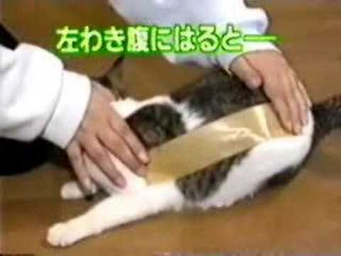 貓對膠布的反應很好笑!看看好了,牠們很慘的呀~