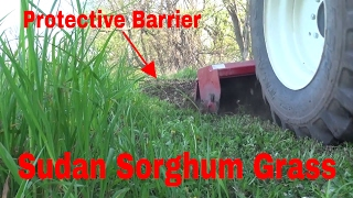 How To Use Sudan Sorghum Grass To Act As A Protective Barrier For Food Plots