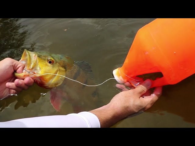 EXOTIC FISH CAUGHT WITH WATER JUG (FISHING ROD)