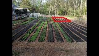 New Garden Beds   NO TILL With CHICKENS