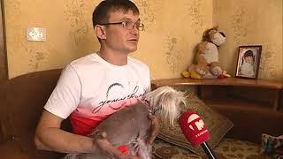Уссуриец выкупил у бомжей китайскую хохлатую собаку и теперь ищет настоящих хозяев
