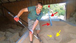 Sprzedaż przyczepy pszenicy - żmijka w akcji